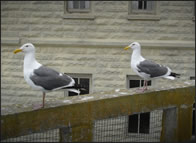 Seagulls on building roof